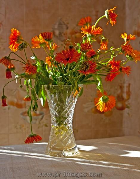 00056-poland-opole-flowers